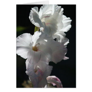 White blossoms on black Greeting Card