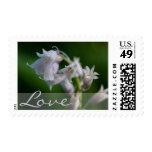 White Bluebells • Love Stamp