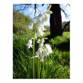White Bluebells Postcard