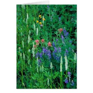 White bog orchid cards