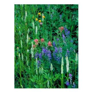 White bog orchid postcard