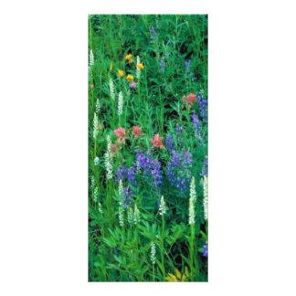 White bog orchid rack card design