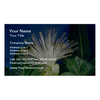 white Bombax Pachira aquatica flowers Business Card Template