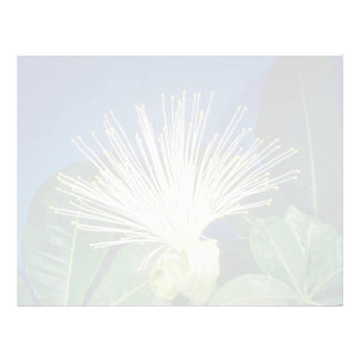 white Bombax Pachira aquatica flowers Customized Letterhead