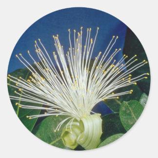 white Bombax Pachira aquatica flowers Round Stickers