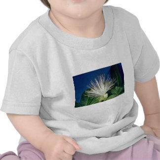 white Bombax Pachira aquatica flowers Tshirts