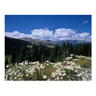 white Boreas Pass, Breckenridge flowers Postcard