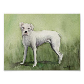 White Boxer Dog Art Print