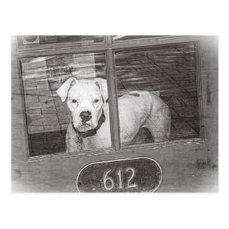 White Boxer Dog Behind Door, Black and White Postcard