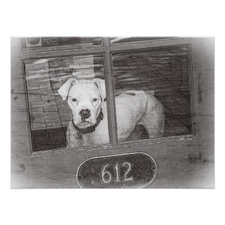 White Boxer Dog Behind Door, Black and White Poster