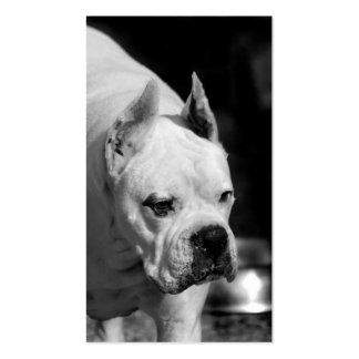White Boxer dog business cards