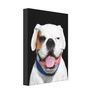 White Boxer Dog Gallery Wrap Canvas