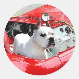 White Boxer Dog in Maserati stickers