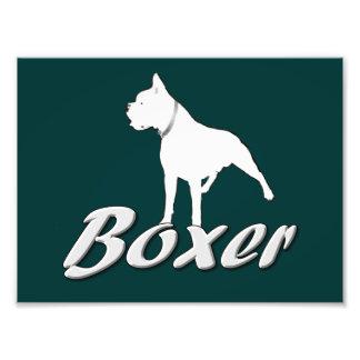 White Boxer Dog Photo