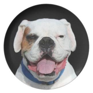 White Boxer Dog Plates