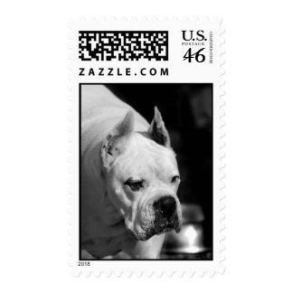 White Boxer Dog postage