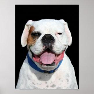 White Boxer Dog Print