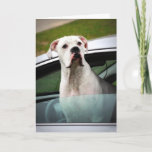 White Boxer in a Car Card
