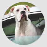White Boxer in a Car Classic Round Sticker