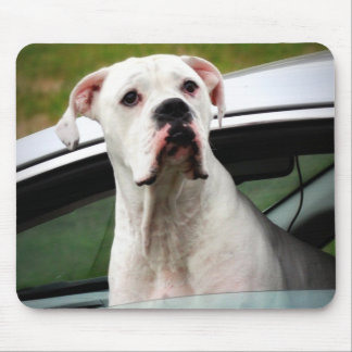 White Boxer in a Car Mouse Pad