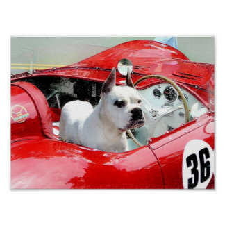 White Boxer in Maserati poster