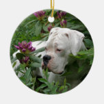 White Boxer in Pink Rhodies Christmas Ornaments
