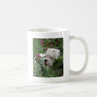 White Boxer in Pink Rhodies Coffee Mug