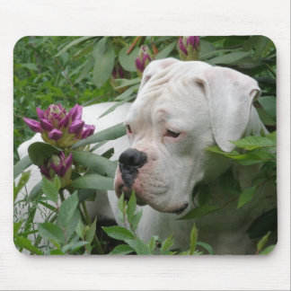 White Boxer in Pink Rhodies Mouse Pad