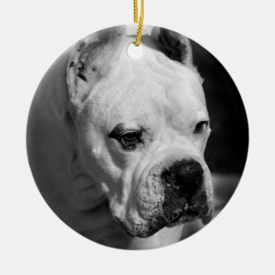White Boxer ornament