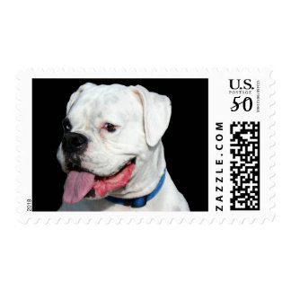 White Boxer postage