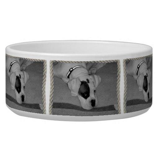 White boxer puppy dog bowl