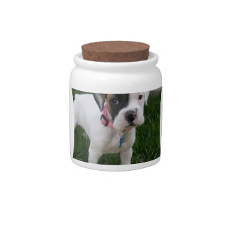 White Boxer Puppy Dog  Candy Jar