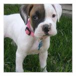 White Boxer Puppy Dog Invitation