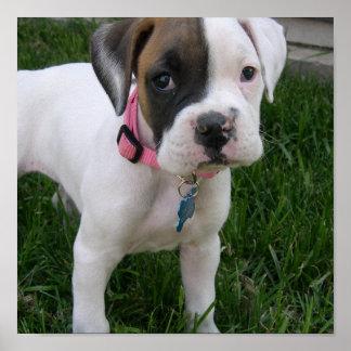 White Boxer Puppy Dog Print