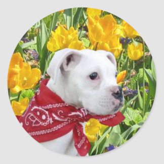 White boxer puppy in Tulips large stickers