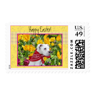 White boxer puppy in Tulips Postage