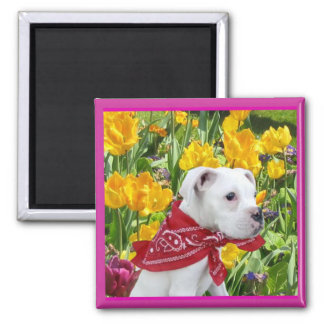 White boxer puppy in Tulips square magnet