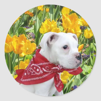 White boxer puppy in Tulips stickers