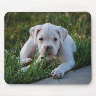 White Boxer Puppy Mouse Pad