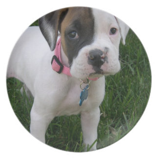 White Boxer Puppy Plate
