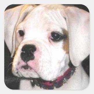 White Boxer puppy stickers