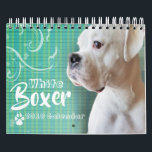 """White Boxer Wall Calendar<br><div class=""""desc"""">The many hilarious faces and moods of a white boxer on a wall calendar. Customizable by year an style.</div>"""