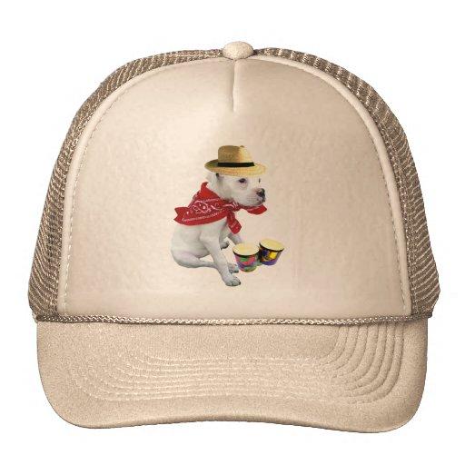 White boxer with bongos hat