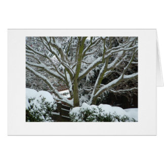 White Branches Card
