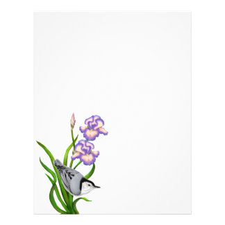 White Breasted Nuthatch on Irises Letterhead