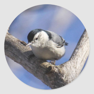 White-breasted Nuthatch Stickers