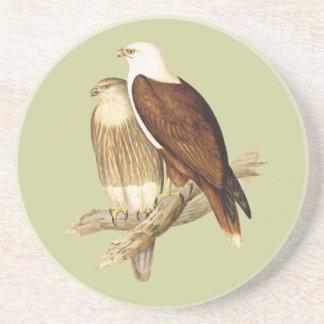 White Breasted Sea Eagle. Large Bird of Prey. Beverage Coasters