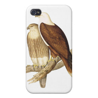 White Breasted Sea Eagle. Large Bird of Prey. iPhone 4 Cover