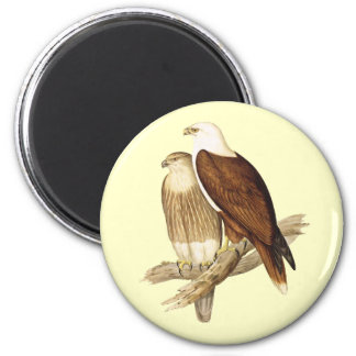 White Breasted Sea Eagle. Large Bird of Prey. Magnet