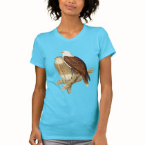 White Breasted Sea Eagle. Large Bird of Prey. Tees